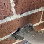 Dayton Rodent Control