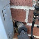 Rodent Control Dayton