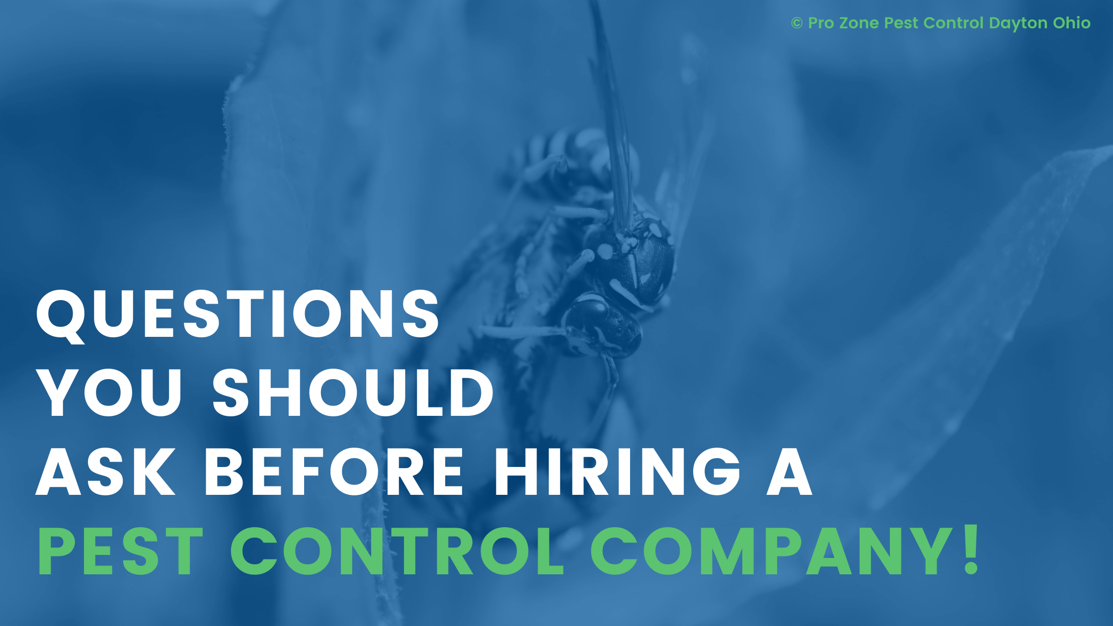 Questions To Ask Before Hiring a Pest Control Company in Dayton OH